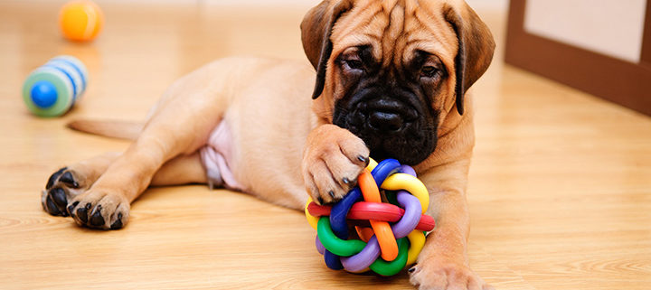 Online Pet Supplies: How to Choose a Good Chew Toy for Your Dog